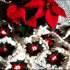 Christmas Poinsettia Scarf